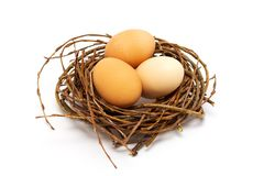 Nya beigea ägg i rede på vit bakgrund arkivbild
