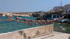 Nya bläckfiskar hängde för att torka, Milos ön, Cyclades, Grekland royaltyfri fotografi