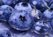 nya blåbär arkivbild