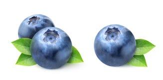 Nya blåbär Royaltyfri Fotografi