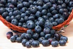Nya blåbär i korg Arkivbilder