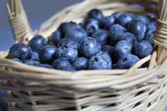 Nya blåbär i liten vide- korg Royaltyfri Fotografi