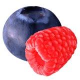 Nya blåbär och hallon som isoleras på vit Royaltyfri Bild