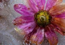 Nya blommor Royaltyfri Fotografi