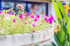 Nya blommor. Fotografering för Bildbyråer