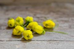 Nya blommor av den guld- duschen för den Songkran festivalen royaltyfri bild