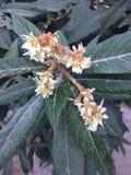 Nya blommor av frukt Royaltyfri Fotografi