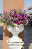 Nya blommor i krukor i trädgården. Arkivbild