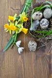 Nya blommor och ett easter rede Fotografering för Bildbyråer