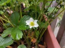 Nya blommor på växterna royaltyfri foto