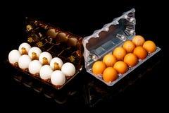 Nya bruna och vita ägg i isolerade genomskinliga plast- magasin Arkivbild