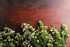 Nya Chamelaucium blommar på abstrakt bakgrund av en träta Fotografering för Bildbyråer