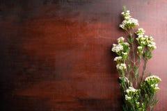 Nya Chamelaucium blommar på abstrakt bakgrund av en träta Arkivbild