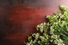 Nya Chamelaucium blommar på abstrakt bakgrund av en träta Arkivfoto