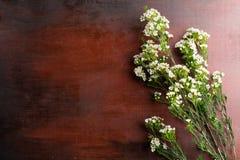 Nya Chamelaucium blommar på abstrakt bakgrund av en träta Royaltyfria Foton