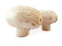 nya champignons Fotografering för Bildbyråer