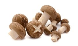 Nya champignons i en korg p? en tr?bakgrund arkivfoto
