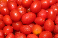 Nya Cherry Tomatoes Royaltyfria Foton