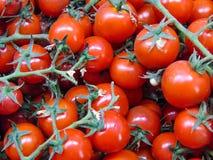 Nya Cherry Tomatoes royaltyfri fotografi