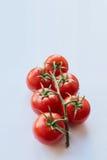 Nya Cherrytomater på vit bakgrund Arkivfoton