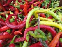 Nya chilies Royaltyfri Fotografi