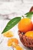 Nya clementines med sidor Fotografering för Bildbyråer