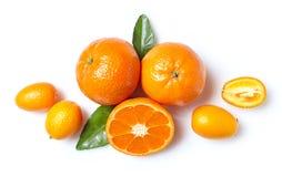 Nya clementines och kumquats Royaltyfri Fotografi