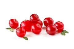 nya cranberries arkivbild