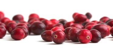 nya cranberries Royaltyfria Foton