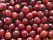 nya cranberries Royaltyfri Fotografi
