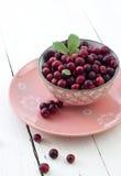 Nya cranberries i bunke Arkivbild