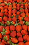 Nya doftande jordgubbar i magasin p? b?nderna marknadsf?r fotografering för bildbyråer