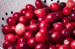 nya durkslagcranberries Royaltyfri Foto
