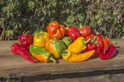 Nya färgrika spanska peppar på trä Royaltyfria Foton