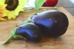 Nya förtjusande mörka purpurfärgade aubergine som skördas på en organisk lantgård i Adjuntas Puerto, Rico Ny aubergine för lantgå royaltyfria bilder