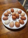 Nya fega ägg för lantbrukarhemlantgård royaltyfria foton