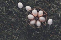 Nya fega vita ägg i låda på lantlig wood bakgrund Arkivfoton