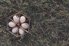 Nya fega vita ägg i låda på lantlig wood bakgrund Arkivbilder