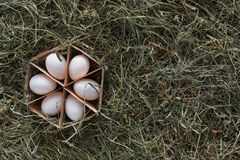 Nya fega vita ägg i låda på lantlig wood bakgrund Arkivfoto