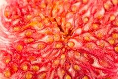 Nya figs, närbild Royaltyfri Foto