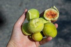 Nya fikonträd bär frukt skivat rymt av den kvinnliga handen royaltyfri fotografi