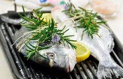 Nya fiskar Fotografering för Bildbyråer