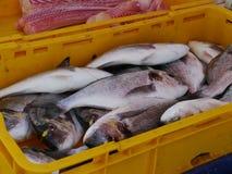 Nya fiskar i en guling badar Fotografering för Bildbyråer