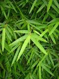 nya forar för bambu Arkivfoto