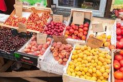 Nya frukter av den nya skörden som är klara till försäljningen Royaltyfri Foto