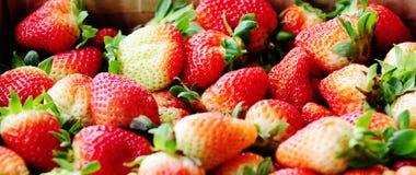 Nya frukter för jordgubbe Royaltyfri Fotografi