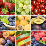 nya frukter för samling Arkivfoto