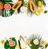 Nya frukter för sommar royaltyfri bild