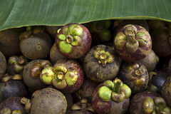 Nya frukter i korg Royaltyfri Foto
