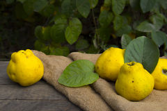Nya frukter, kvitten Royaltyfria Bilder